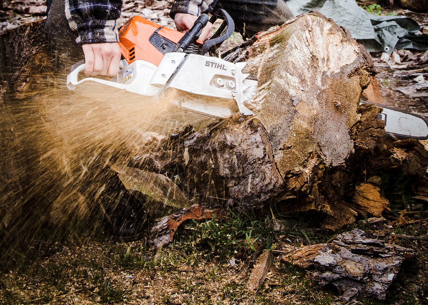 Træfælding - Rørvig Hus & Have